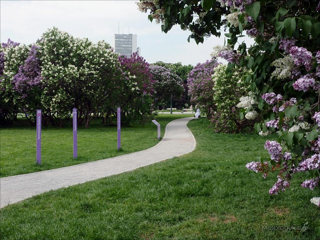 Сиреневый сад на Щёлковском шоссе в Москве